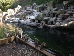 penguin hunting at the zoo